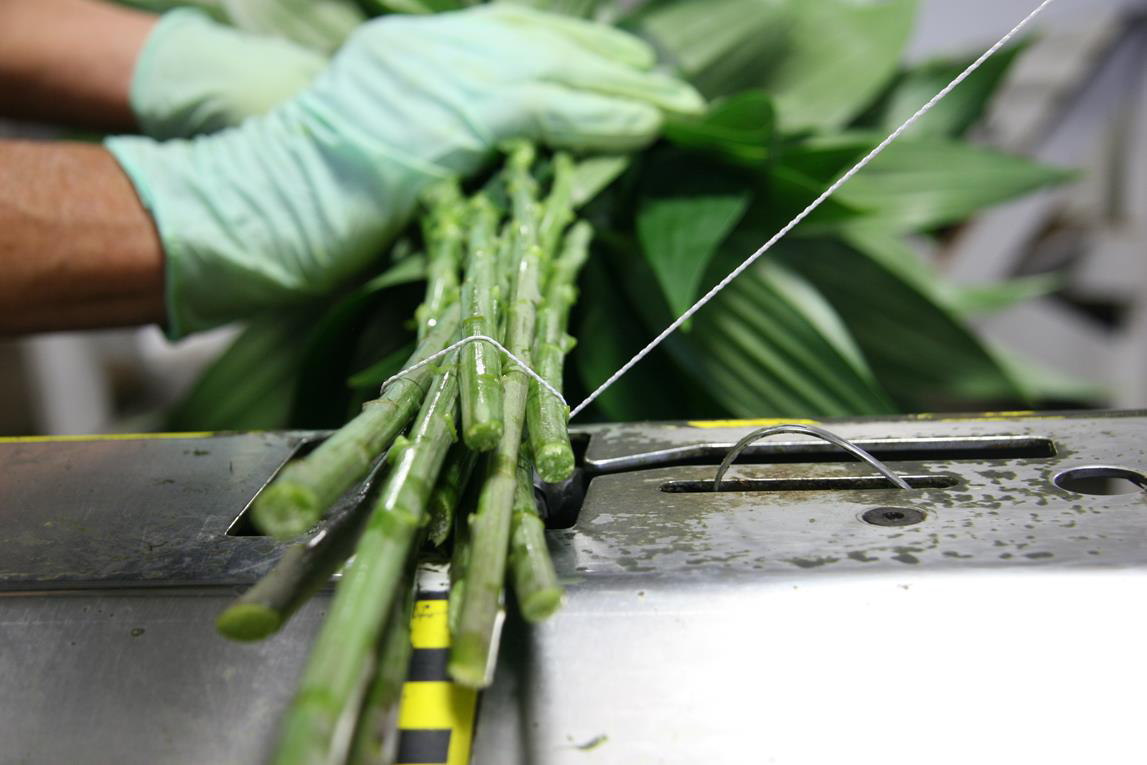 worker tying flower stems
