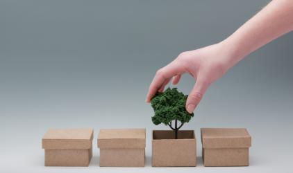 Hand putting a small tree in a box